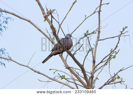 Pigeons And Doves Constitute The Bird Family Columbidae And The Order Columbiformes, Which Includes
