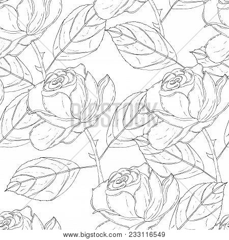 Seamless Vector Pattern With Uncolored Roses. Black And White Natural Pattern.