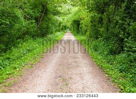 Trees and bushes along straight rural dirt road forming a tunnel in Southern England