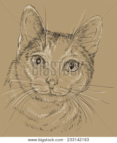 Vector Outline Monochrome Portrait Of Curious Mongrel Cat In Black And White Colors. Hand Drawing Il
