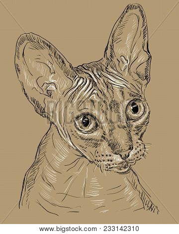 Vector Outline Monochrome Portrait Of Hairless Curious Sphynx Cat In Black And White Colors. Hand Dr