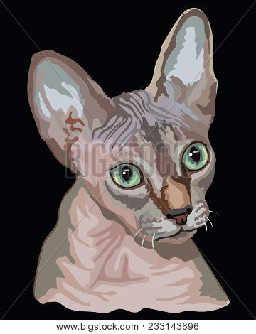 Vector Outline Colorful Portrait Of Hairless Curious Sphynx Cat In Pink And Grey Colors. Illustratio