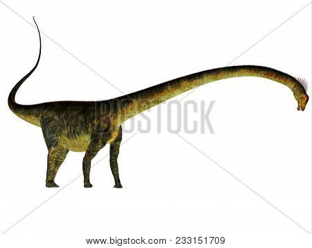 Barosaurus Dinosaur Side Profile 3d Illustration - Barosaurus Was A Herbivorous Sauropod Dinosaur Th