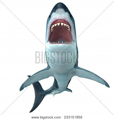 Megalodon Shark Front Profile 3d Illustration - The Prehistoric Megalodon Shark Could Grow To Be 82