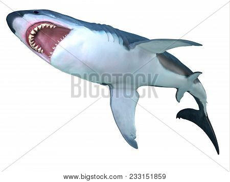 Megalodon Shark Underbelly 3d Illustration - The Prehistoric Megalodon Shark Could Grow To Be 82 Fee