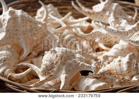 Sea shells in a basket. Selective focus on front shells