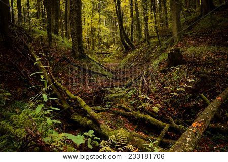 Bright Green Forest In Day Light. Small Stream Through Vivid Green Forest. Peaceful Green Forest Tre