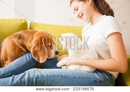 The Dog, The Cat, And The Girl Are Playing On The Sofa