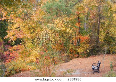 This was taken at the Dismal Swamp Canal in Chesapeake Va. A lovely Autumn scene and an empty bench. A lonesome bench in an Autumn setting. A scene from my favorite season. A scene that asks for you to be there. I used Nikon DX to add a little color. poster