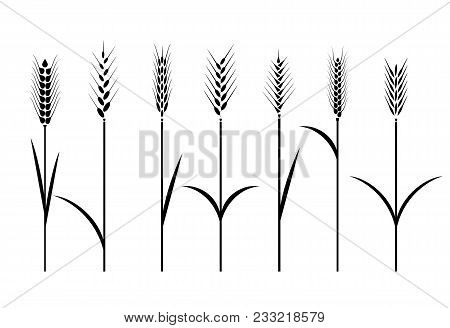 Wheat Field. Cereals Icon Set With Rice, Wheat, Corn, Oats, Rye, Barley. Ears Of Wheat Bread Symbols