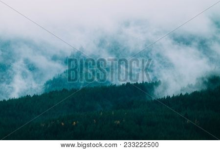 Beautiful Foggy Mystic Mountains. Fog Clouds At The Pine Tree Mystical Woods, Morning. Europe, Myste