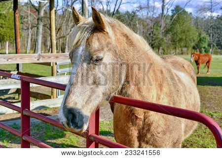 A Closeup Of A Friendly Tan Brown Horse Standing By A Red Metal Fence In A Corral With Another Brown