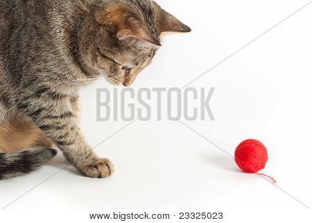 Cat And Red Clew