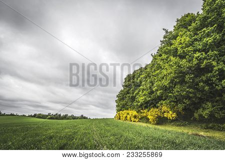 Agriculture Landscape With Crops On A Field Next To A Forest With Green Broom Bushes
