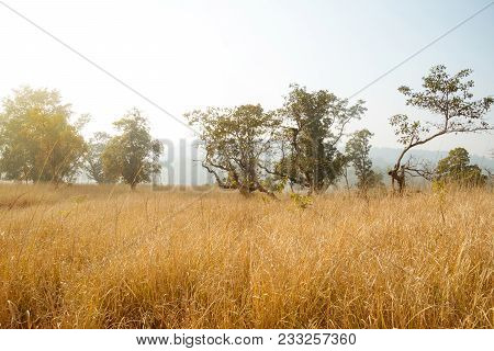 Autumn Scenery With Stubble-field. Tall Dry Grass Is Yellow In Colour. Autumn Landscape