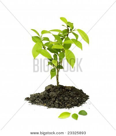 Seedling green plant