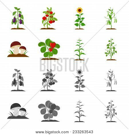 Mushrooms, Strawberries, Corn, Cucumber.plant Set Collection Icons In Cartoon, Monochrome Style Vect
