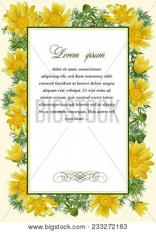 Frame With The Flowers Of Adonis Vernalis For Posters, Coats And Posters