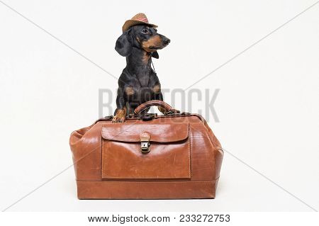 Dachshund Breed Dog, Black And Tan, In Cowboy Hat Stands On Vintage Suitcase, Is Isolated On Gray Ba