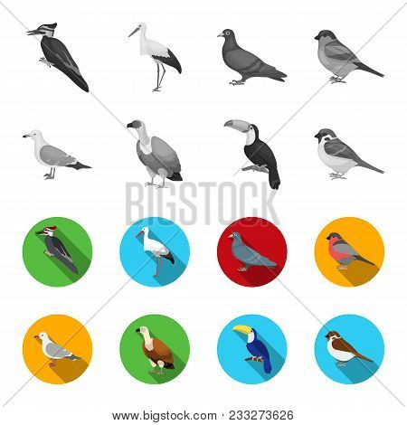 Gull, Toucan And Other Species. Birds Set Collection Icons In Monochrome, Flat Style Vector Symbol S