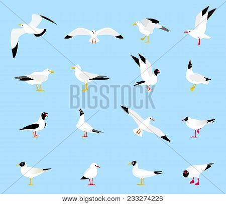 Sea Gull, A Beautiful Bird. Cute Bird In Cartoon Style. Floating, Standing And Flying Birds In A Fla