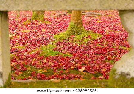 Soft Focus Image Beautiful Morning Sunlight, Trunk Of Tree And Green Grass And Autumn Red, Yellow, O