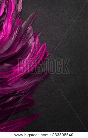 Rooster feathers. Carnival. Pink feather on a black background
