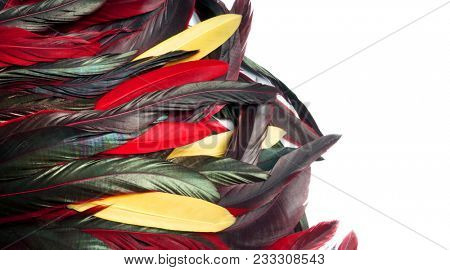 Rooster feathers. Carnival. Colored feather on a yellow background