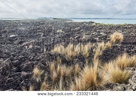 View Of The Lava Field At Flax Point Rangitoto Island New Zealand
