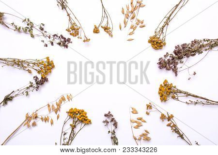Flat Lay Frame. Dry Branches Of Tansy And Heather On A White Background. Calluna Vulgaris And Tanace