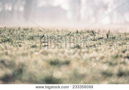 Close-up Of Winter Grassland With Morning Dew.