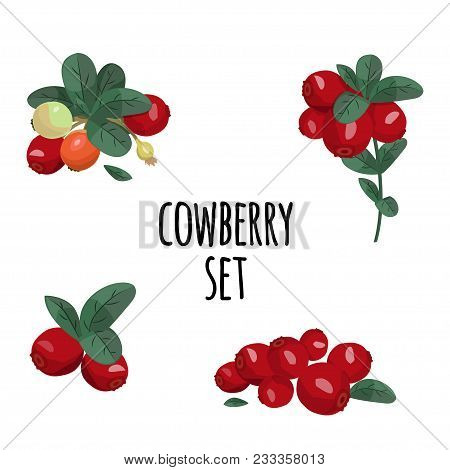 Colorful Illustration, Isolated Elements. Cowberry And Leaves Vector Set.
