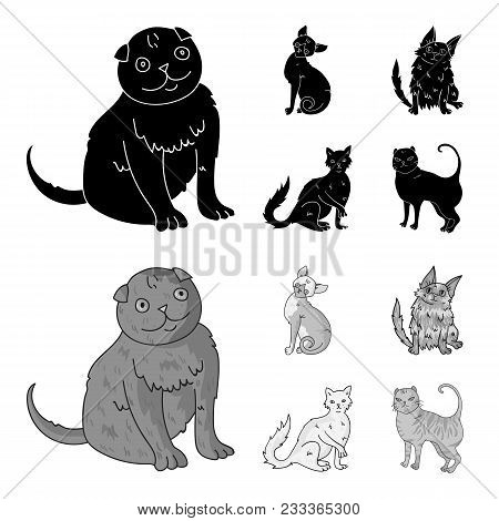 Turkish Angora, British Longhair And Other Species. Cat Breeds Set Collection Icons In Black, Monoch