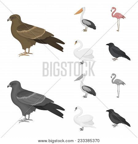 Kite, Pelican, Flamingo, Swan. Birds Set Collection Icons In Cartoon, Monochrome Style Vector Symbol