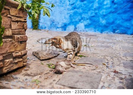 Beautiful Stray Cats Sleep And Walk In The Streets Of Morocco. Beautiful Fairy-tale Streets Of Moroc