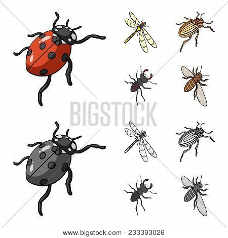 Arthropods Insect Ladybird, Dragonfly, Beetle, Colorado Beetle Insects Set Collection Icons In Carto