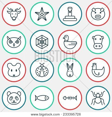 Zoo Icons Set With Arachnid, Spider Web, Rabbit And Other Seafood Skeleton Elements. Isolated  Illus