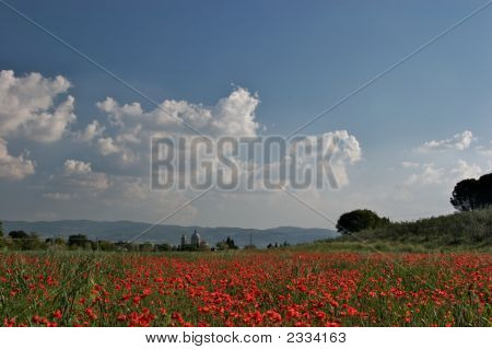 Panorama, Poppy Fields Below Assisi, Italy