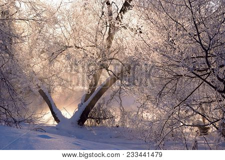 Trees Covered With Hoarfrost Lit Behind With A Rising Sun, Against A Foggy River