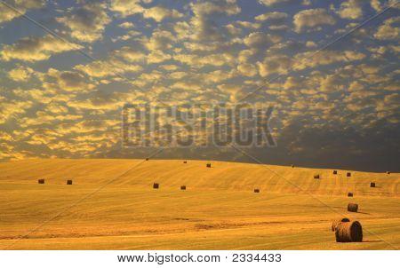 Autumn Hay Harvest At Sunset