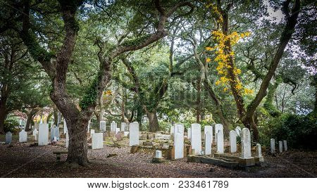 November 24 2017: Beaufort North Carolina Us:trees And Ivy In A Cemetary With Headstones