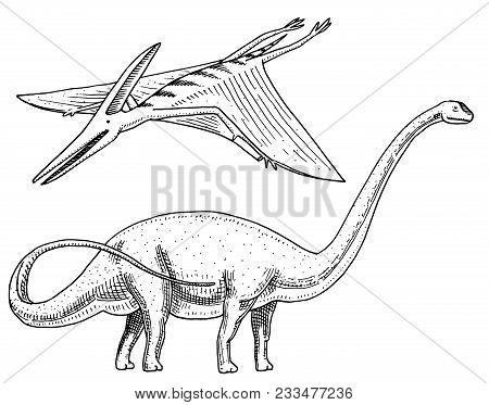Dinosaurs Brachiosaurus Or Sauropod, Plateosaurus, Diplodocus, Apatosaurus, Pterosaur, Skeletons, Fo