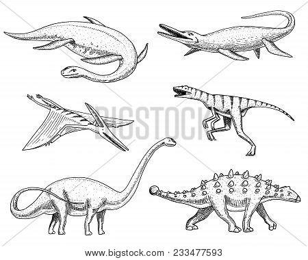 Dinosaurs Elasmosaurus, Mosasaurus, Barosaurus, Diplodocus, Pterosaur, Ankylosaurus, Velociraptor, F