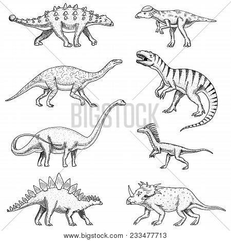 Dinosaurs Set, Triceratops, Barosaurus, Tyrannosaurus Rex, Stegosaurus, Pachycephalosaurus, Diplodoc