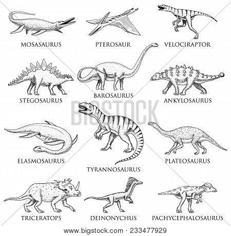 Dinosaurs Set, Tyrannosaurus Rex, Triceratops, Barosaurus, Diplodocus, Velociraptor, Triceratops Ste