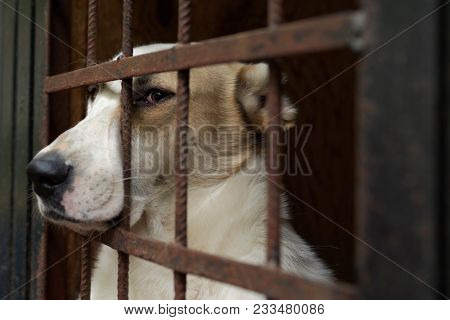 Dog in the shelter for homeless animals