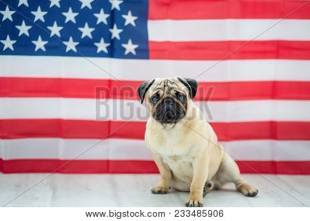 Pug On The Background Of The American Flag. Beautiful Beige Puppy Pug On The Background Of The Ameri