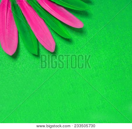Bright parrot feathers. Green and pink feather