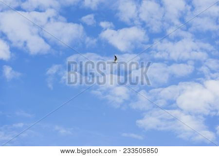 Lonely Single Seagull Hovering High In The Blue Sky