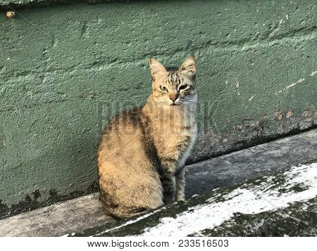 A Cute Stray Cat Sitting On A Wall At The Wet Market In Perak, Malaysia. She Is Waiting For Someone